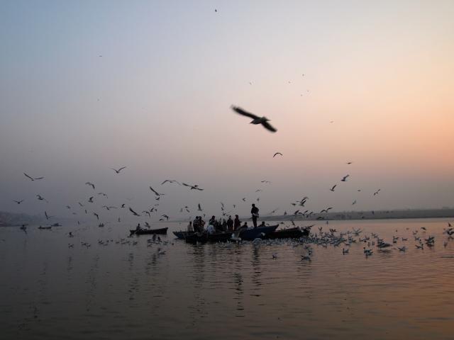 Birds enjoy Ganges Sunrise